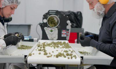 Taxes sur le cannabis au Canada