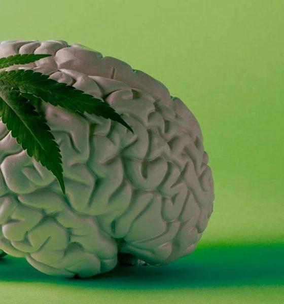 Cannabis et cerveau
