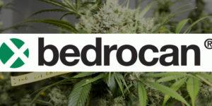 Bedrocan, le fournisseur européen de cannabis médical