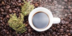Caféine et cannabis : Une combinaison efficace ?