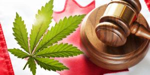 Canada: le projet de loi sur la légalisation du cannabis passé au crible
