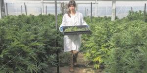 Colombie : Le gouvernement liste les règlementations du cannabis médical
