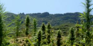 Le haschisch représenterait 23% du PIB marocain