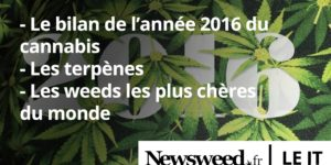 Le premier JT du cannabis en France