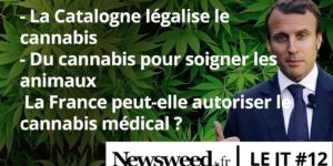 Le JT de Newsweed #12