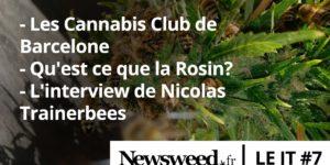 Le JT de Newsweed – #7