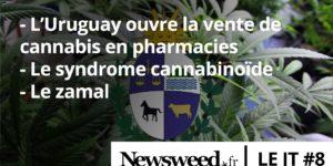 Le JT de Newsweed – #8