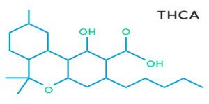 Le THCA serait efficace contre les maladies neurodégénératives