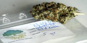 Un CSC néerlandais veut faire pousser du cannabis à but scientifique