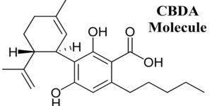Qu'est-ce que l'acide cannabidiolique (CBDA) ?