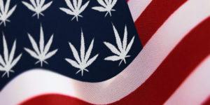 Ventes de cannabis aux Etats-Unis : bilan à la mi-année