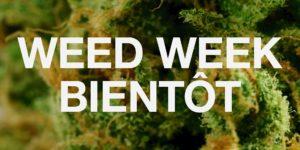VICELAND déroule sa Weed Week à partir du 17 avril