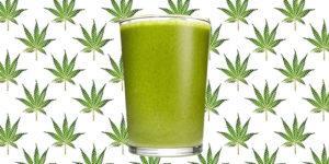 Zoom sur les boissons au cannabis