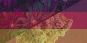 57% des Allemands en faveur d'une légalisation du cannabis