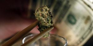 La légalisation du cannabis fait-elle augmenter sa consommation ?