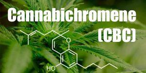 Le cannabichromene ou CBC : activateur de THC