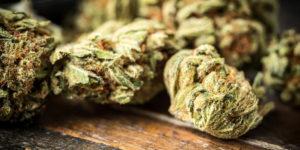 Belgique : prochaine expérimentation d'un Cannabis Club à Mons