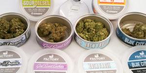 Du cannabis en conserve