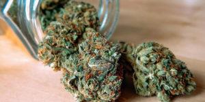 Des scientifiques jamaïcains créent un médicament contre l'hépatite C à base de cannabis
