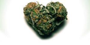 Le cannabis pourrait aider les patients insuffisants cardiaques