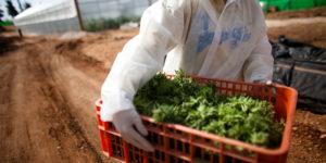 L'Australie reçoit ses premières importations de cannabis médical