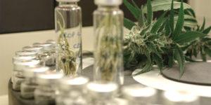 Canopy Growth s'installe sur le marché danois du cannabis médical