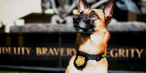 Etats-Unis : certains chiens policiers seront entraînés à ne plus détecter la weed