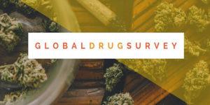 Global Drug Survey : derniers chiffres de la consommation de cannabis dans le monde
