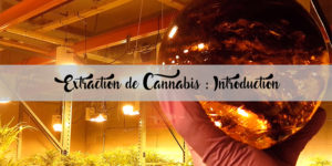 Extraction de Cannabis : Introduction