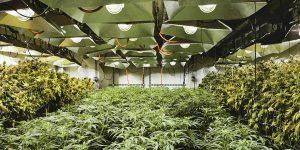 Au Colorado, les producteurs de marijuana monopolisent les entrepôts