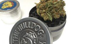 Pourquoi acheter un grinder The Bulldog ?