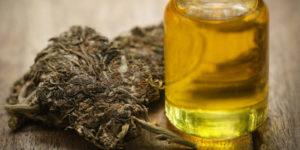 L'Uruguay exportera de l'huile de cannabis