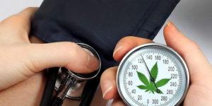 Cannabis et hypertension