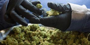 5 idées reçues sur le cannabis médical