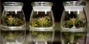 L'Illinois espère ajouter 8 troubles à la liste des maladies pouvant être traitées avec du cannabis