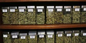 La vaste majorité des Irlandais pour une légalisation du cannabis médical
