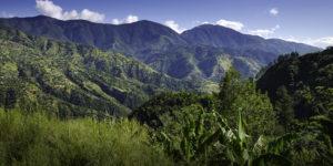 Canopy Growth produira du cannabis en Jamaïque