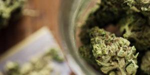 Vermont : une légalisation du cannabis dès janvier ?