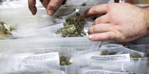 Etats-Unis : les Etats où le cannabis est légal voient moins de crimes violents