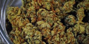 Lituanie : le cannabis médical bientôt approuvé