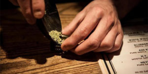 Le Parlement néerlandais vote en faveur de la légalisation de la production de cannabis