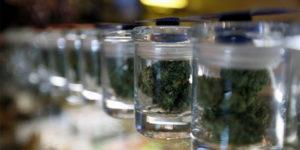 Le Québec vendra du cannabis à travers la SAQ
