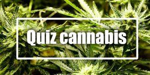 [QUIZ] Que connaissez-vous du cannabis ?