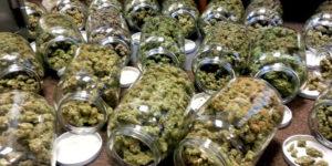 Italie : un Rastafari autorisé à consommer du cannabis