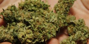 Royaume-Uni : s'il est élu, le parti libéral-démocrate légalisera le cannabis